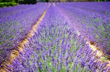 De Franse sfeer in eigen tuin