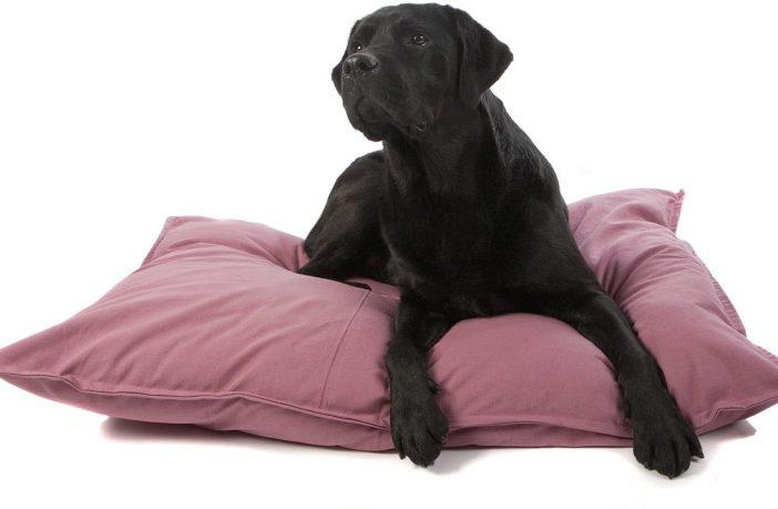 Een nieuw bed voor jouw hond
