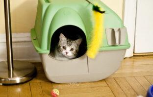 Tips tegen kattenurine