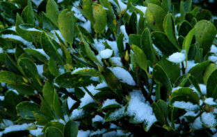 Kunstplant winter