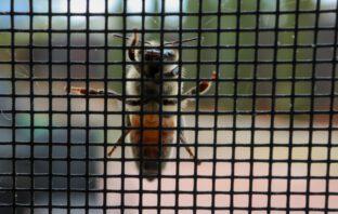 Tips om insecten buiten te houden